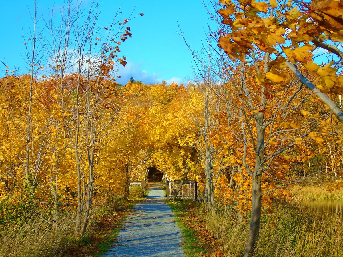 Autumn&#39;s Archway - Corner Brook Stream. #FollowForFollowBack #Retweet<br>http://pic.twitter.com/bdAlY1V7Xu