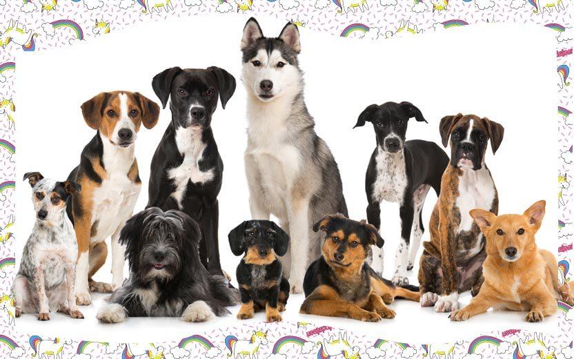 TESTE – Qual raça de cachorro é a sua cara? https://t.co/XUrsceUx7u