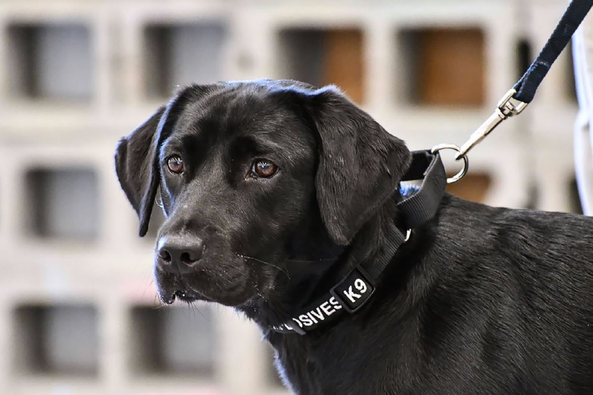 Trainee sniffer dog Lulu drops out of bomb school to play with squirrels https://t.co/dvNWAhEMSM