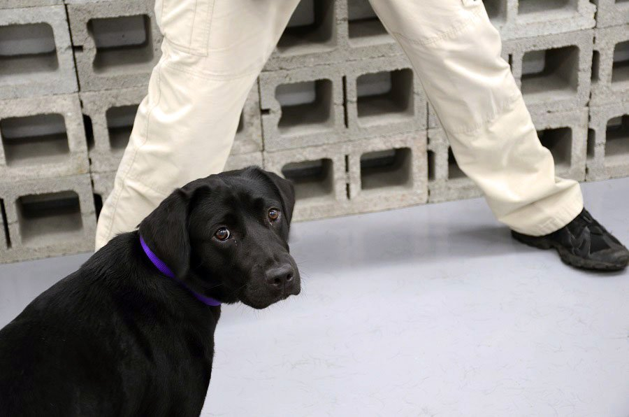 Lulu the dog flunks out of CIA's bomb-sniffing school because she preferred to play https://t.co/fTxt31IcJ4