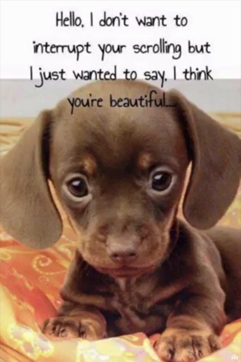 "Nolene Dougan on Twitter ""Retweet if the cute puppy eyes stop you"