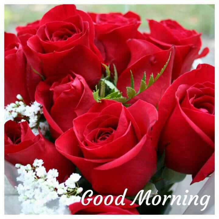 Sheela Singh On Twitter Good Morning Ji