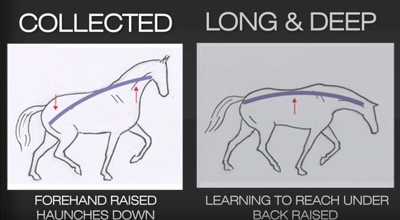 @HorseBloggers_ How to engage your horse...