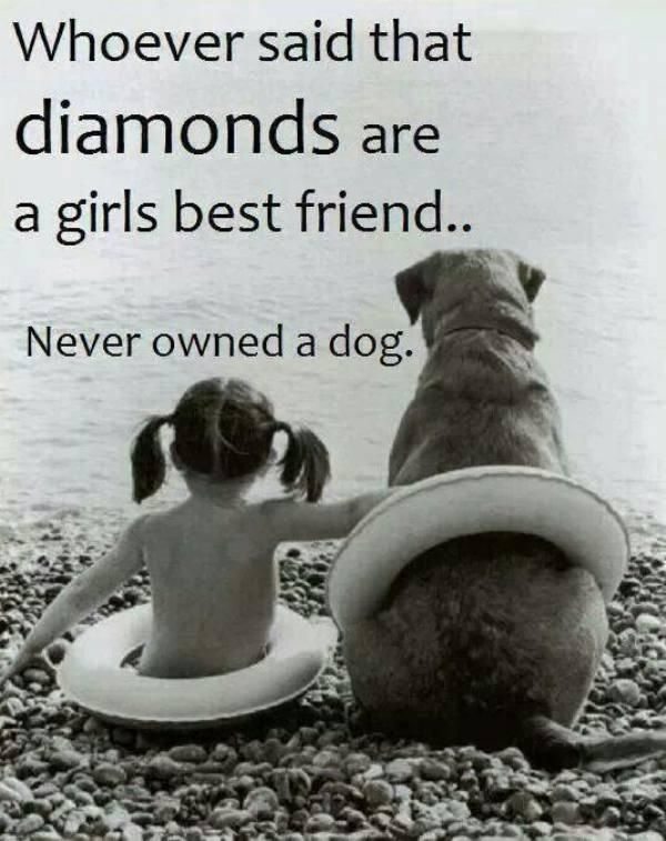 You can keep your #diamonds, give me a dog any day! #BFF #DogsofTwitter #DogMom #DogDad #Dogs #Dog<br>http://pic.twitter.com/rCo1M6S02f