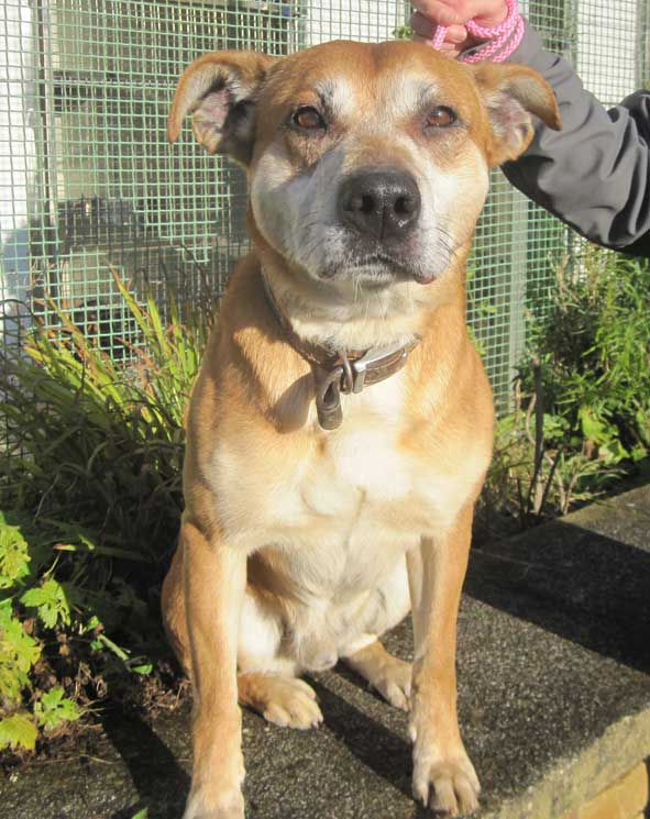 #Lancashire Baxter is the longest resident @animalcarelancs waiting for a chance for over 3 years!! Baxter has ...  http:// rescuedogs.org.uk/dog-rescues/no rth-west/animal-care-lancaster/adopt-baxter &nbsp; … <br>http://pic.twitter.com/wLLUFEQwje