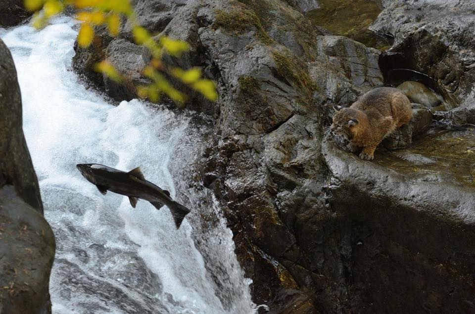 Sol duc river latest news breaking headlines and top for Sol duc river fishing