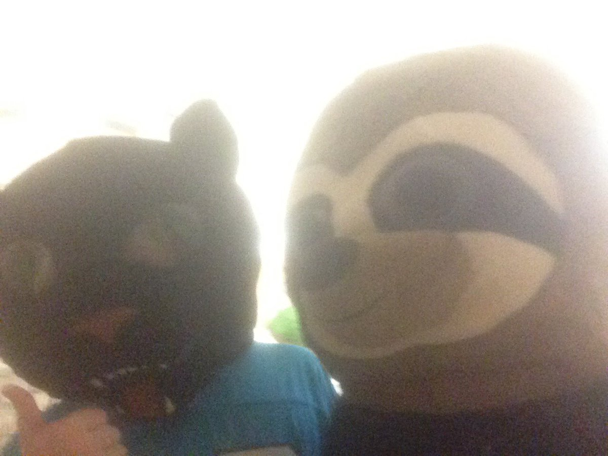 SLOTH AND CAT DUO IS THE BEST! #maskimals #NationalSlothDay<br>http://pic.twitter.com/WMLn9TOjQJ