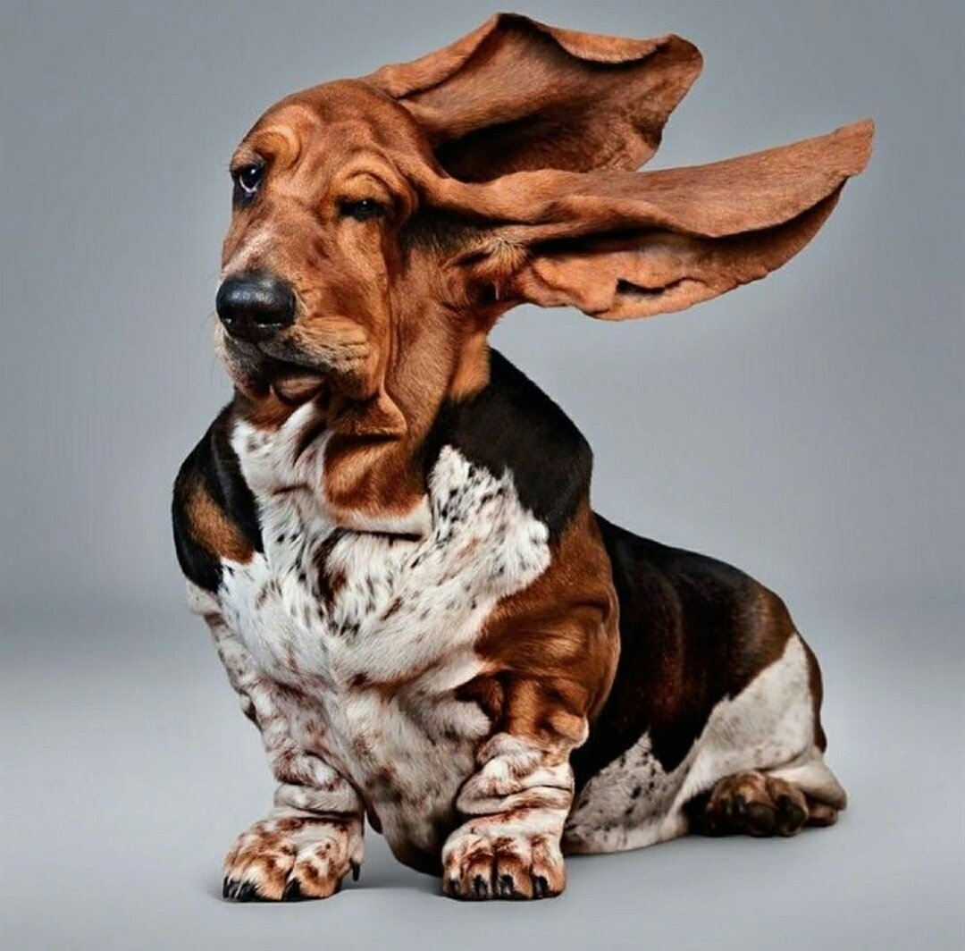 There be a windy day ahead here in Pembrokeshire #winds #gales  #Wales<br>http://pic.twitter.com/8vg3bDFvQQ