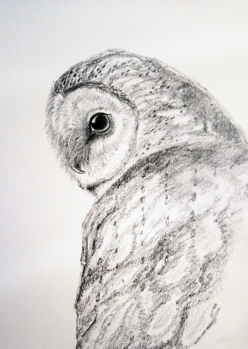 Tracychurchilldesign on twitter womensart1 barn owl pencil