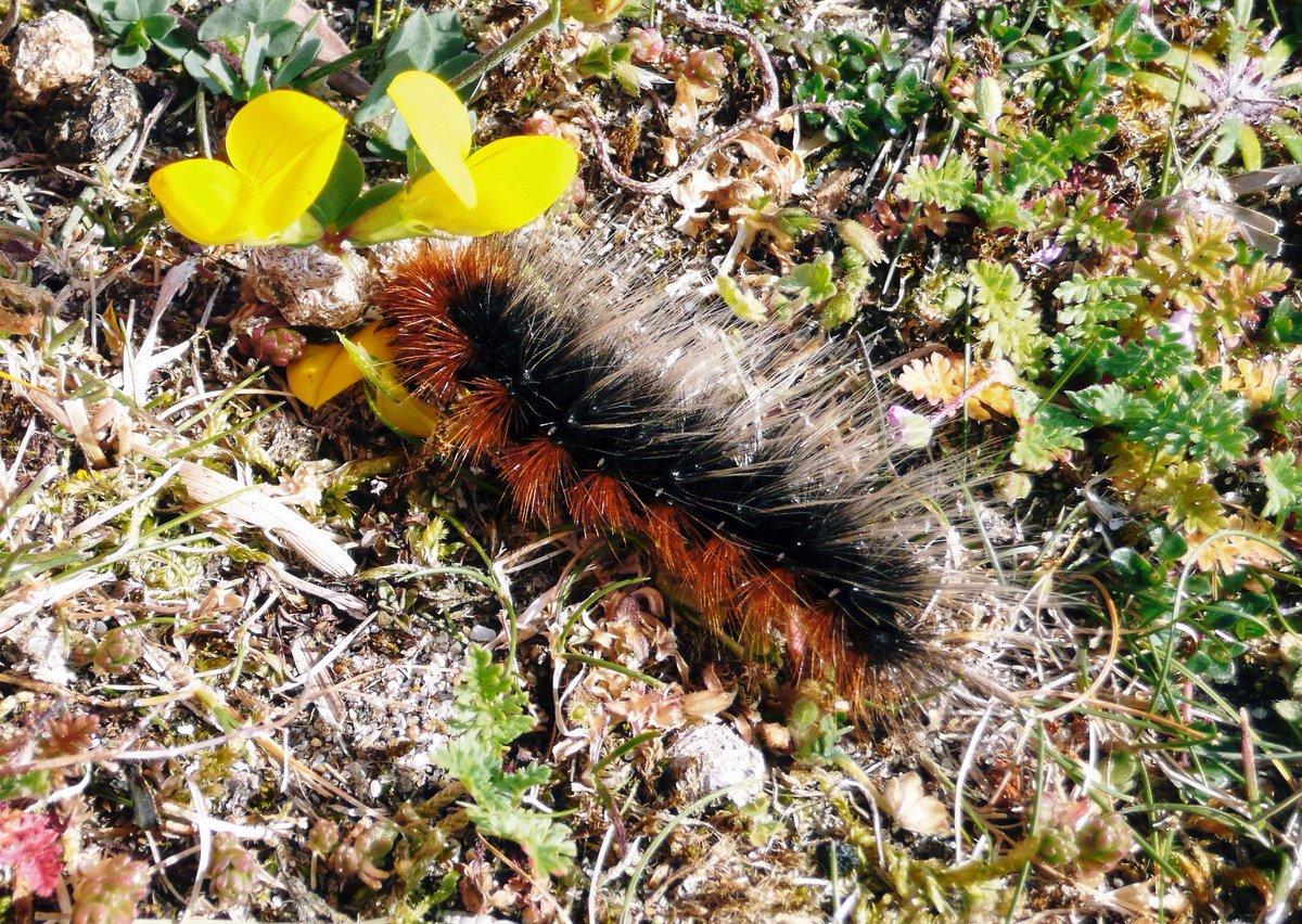 caterpillars hashtag on twitter