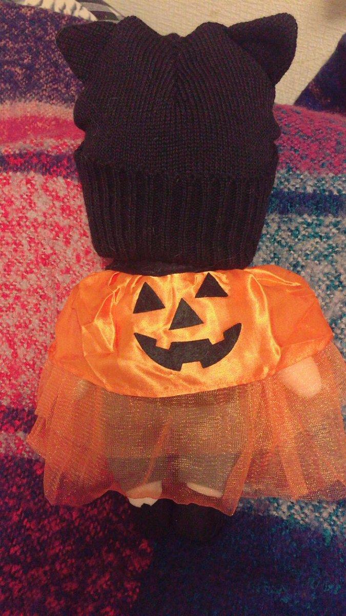 test ツイッターメディア - ダイソーのキッズ用ニット帽がいがぐりジェジュンにぴったりって見たので早速買ってきた! 犬用のハロウィン??服も合う~www可愛い? 品切れになってるとこもあるみたいだったからお友達の分まで買ったら黒なくなった(ごめん)  #いがぐりジェジュン #ダイソー https://t.co/33e1RE8m3u