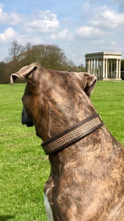 #dogs #dogs of twitter #follo #follous for luxury dog wear<br>http://pic.twitter.com/gX9bBdmyIX