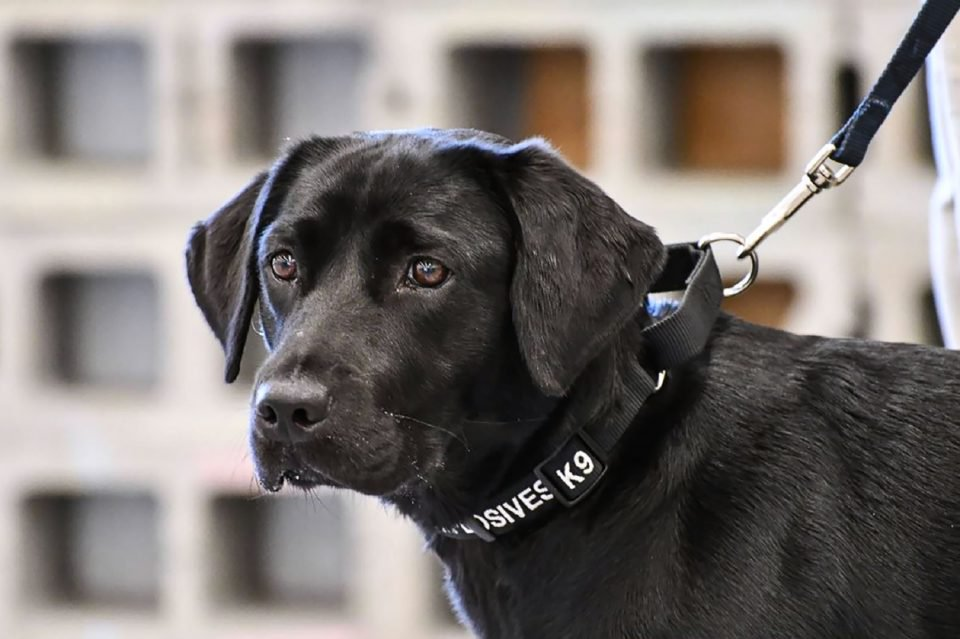 Trainee sniffer dog Lulu drops out of bomb school to play with squirrels https://t.co/dpBIikYUYR