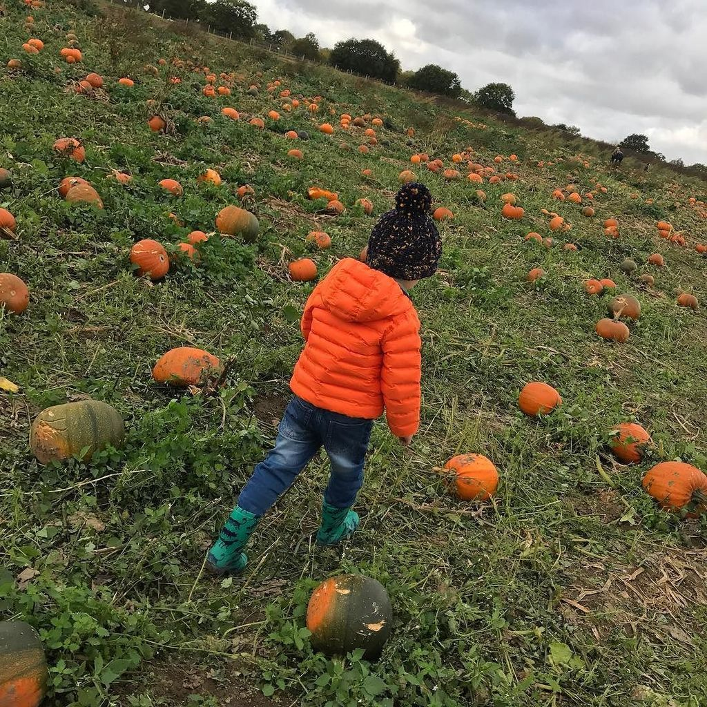 Picking pumpkins 🎃 https://t.co/tMEPZWDS3N https://t.co/g6CFhUDxrk