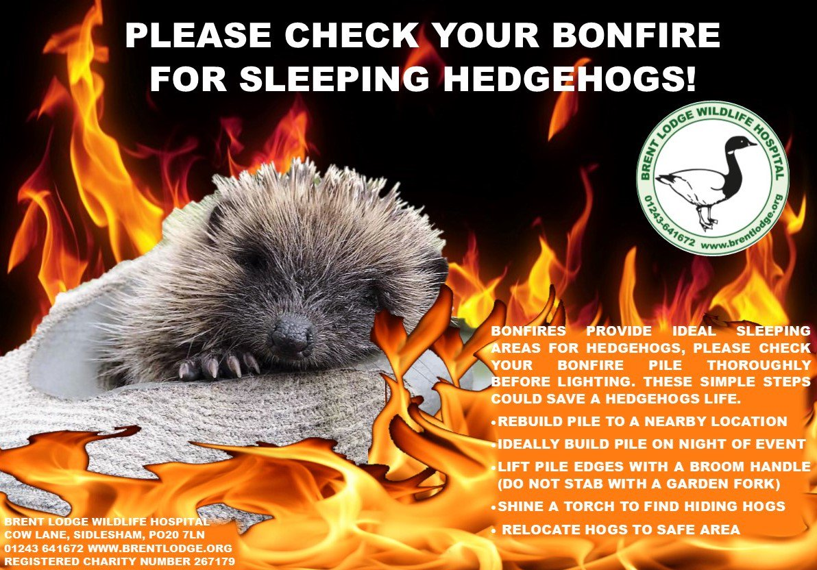test Twitter Media - For all those planning bonfires... please read #bonfire #BonfireNight #rememberrember5thnovember #hedgehogs 🦔🐾🔥💥📛 https://t.co/NxEcnyHP2m