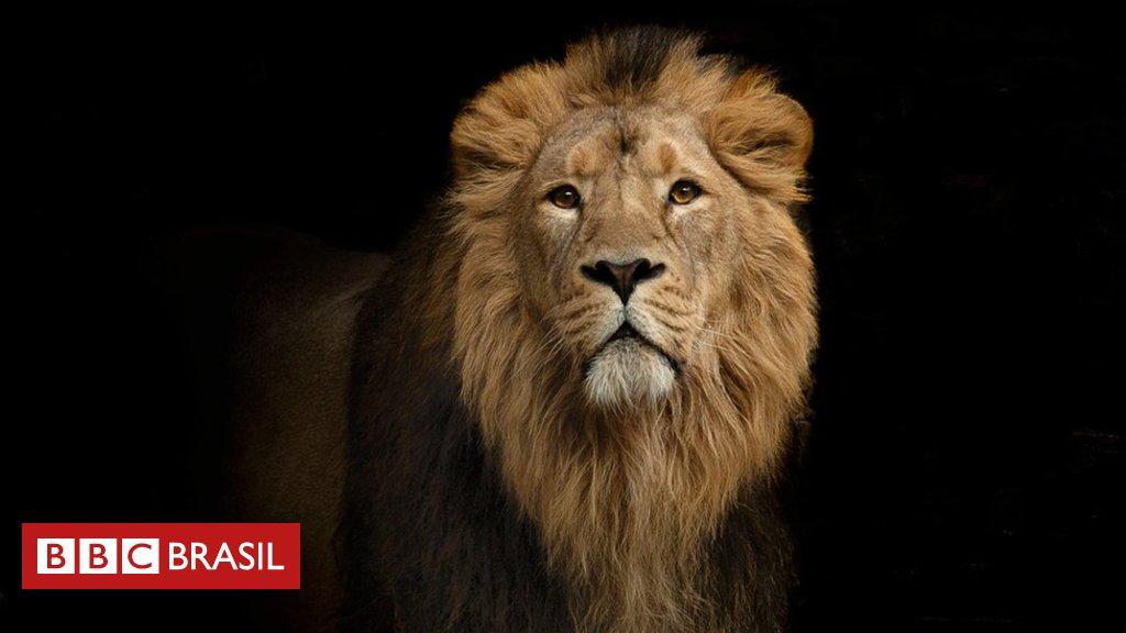 Por que os leões têm juba? As curiosas perguntas da Universidade de Oxford para selecionar alunos de ciências https://t.co/i6pkcoqCMx