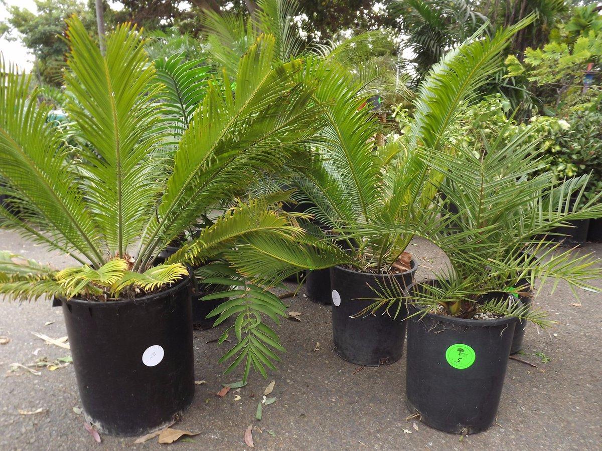 Sd Botanic Garden On Twitter We Have Indoor Plants Outdoor Shade Drought Tolerant Rare Bonsai Fall