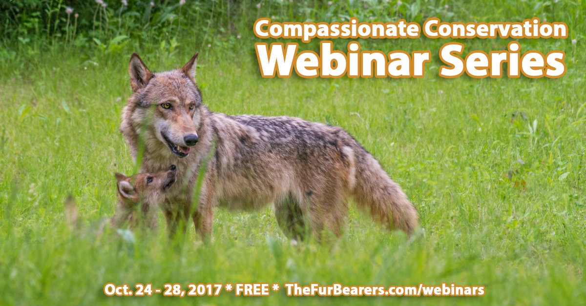10 FREE #WEBINARS! #Wildlife, #research, #animal #advocacy, #compassion #fatigue &amp; more are discussed! REGISTER NOW:  http:// thefurbearers.com/webinar-series  &nbsp;  <br>http://pic.twitter.com/1KE0VlRW86