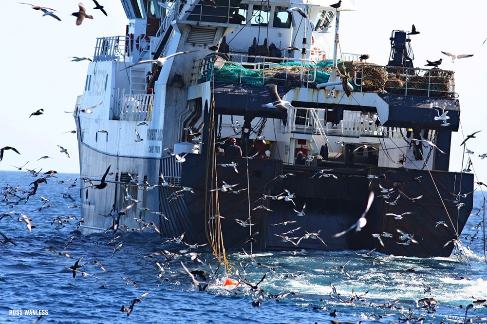 Orange 'scaring lines' reduced bird bycatch in South Africa trawl fishery by 90%. #EarthOptimism #OceanOptimism https://t.co/v1UhDqnzBq