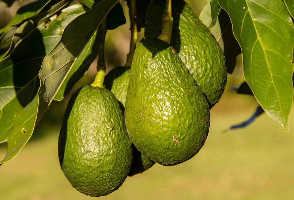 What makes #avocados a #SuperFood? They'...