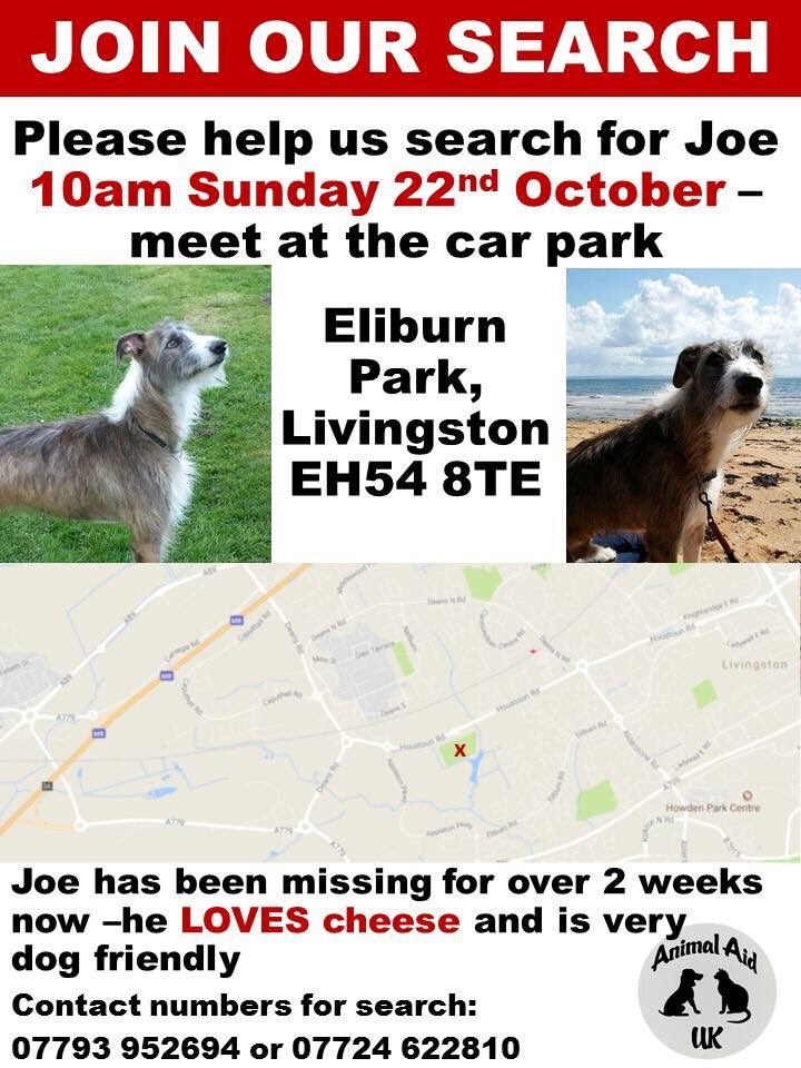 #findJoeLurcher search #HELP needed 22/10 #SUNDAY TOMORROW #rain or #shine meet at #carpark #EliburnPark #Livingston EH54 8TE #Scotland<br>http://pic.twitter.com/XSIKBVDDBy