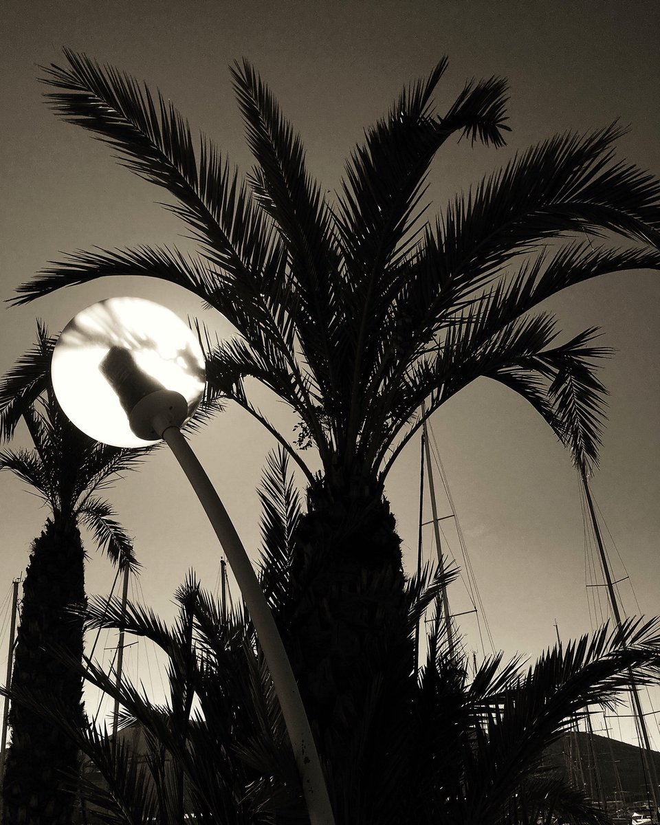 When you steal the #sun for a moment.. #spain #cartagena #palm #blacknwhite #blackandwhite #bnw #bw #bw_lover #bw_society #traveling #travel<br>http://pic.twitter.com/bAO9lq75QH