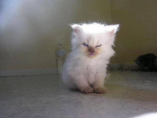 #NapsInFiveWords I always wake up grumpy...