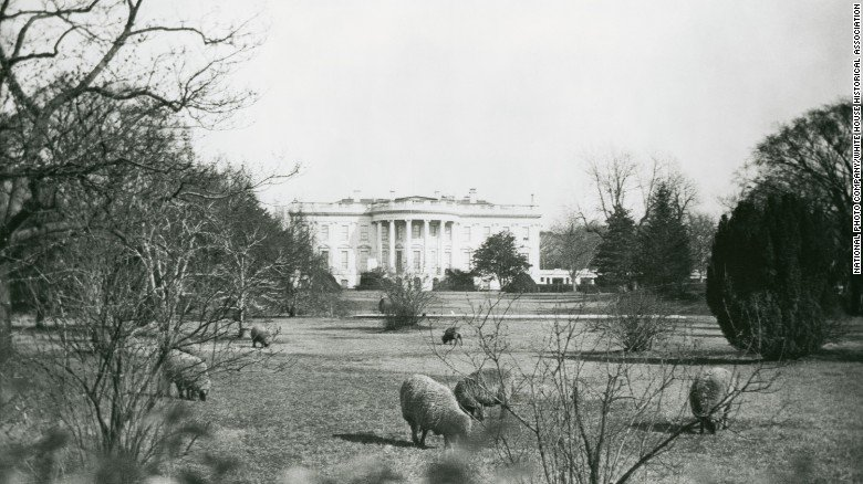 President Trump is breaking with tradition on a more personal matter: keeping a pet at the White House https://t.co/rP8rT7gxD1