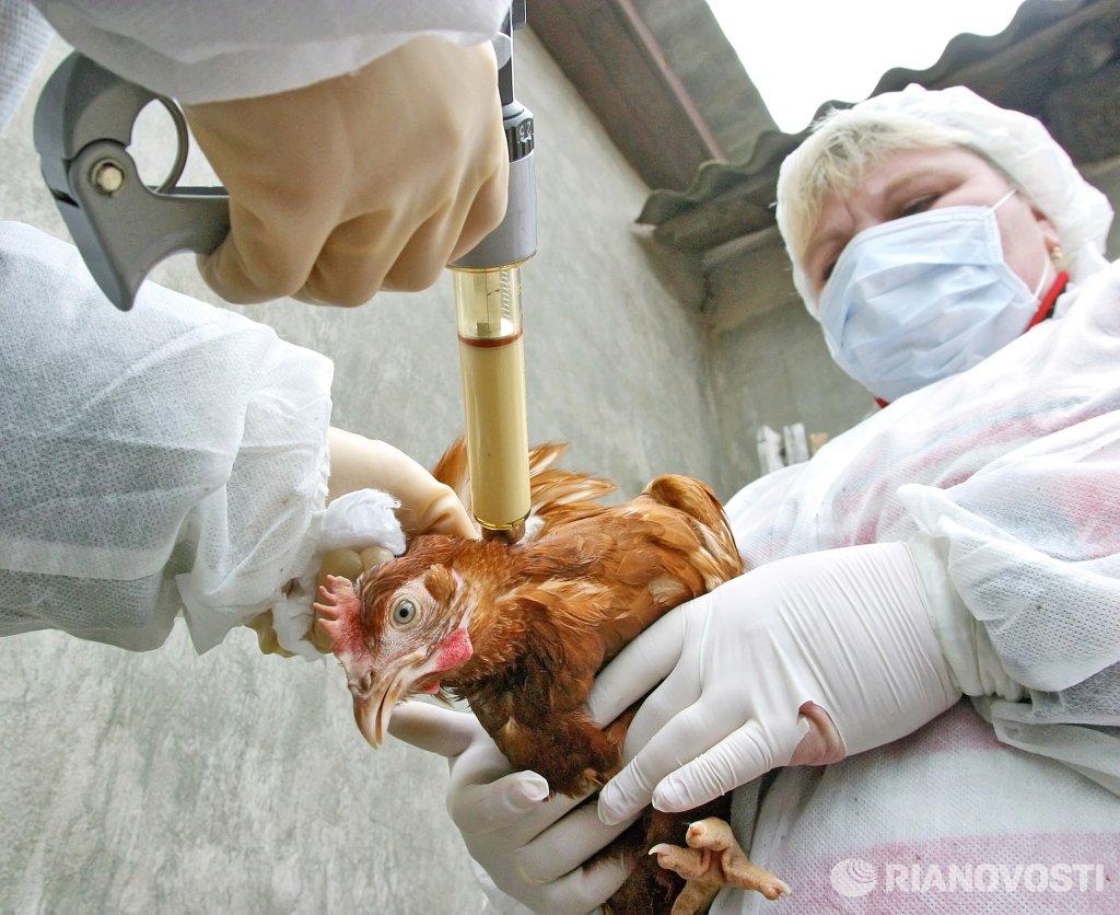 птичьего гриппа картинки для этот праздник