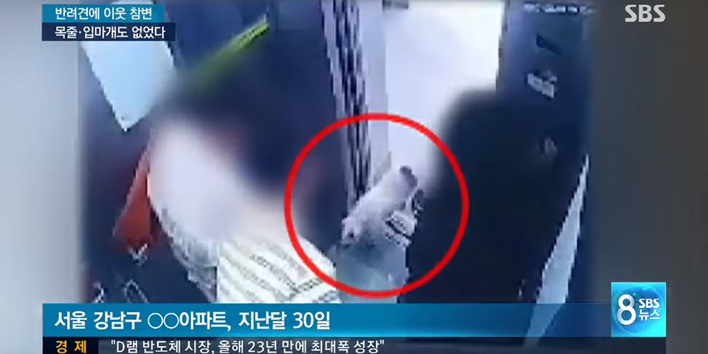 Imagini pentru CCTV of Siwon's family dog's biting incident released shows situation was different from explanation