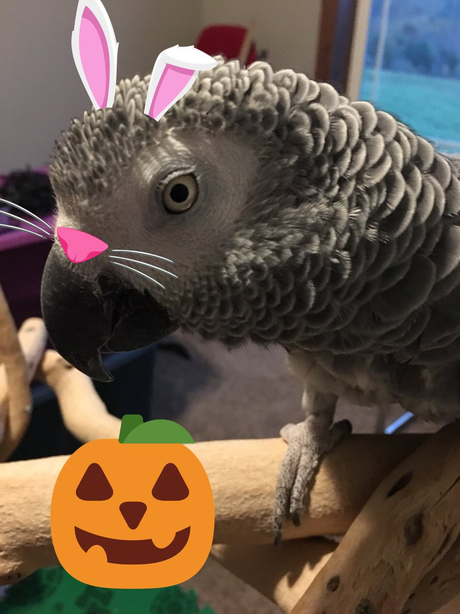 It's almost Halloween  @HyperRTs @Halloweenmovies @GamerRetweeters #twitchkittens @ParrotOfTheDay #birb @FlyRts<br>http://pic.twitter.com/DPrGWgeTnH