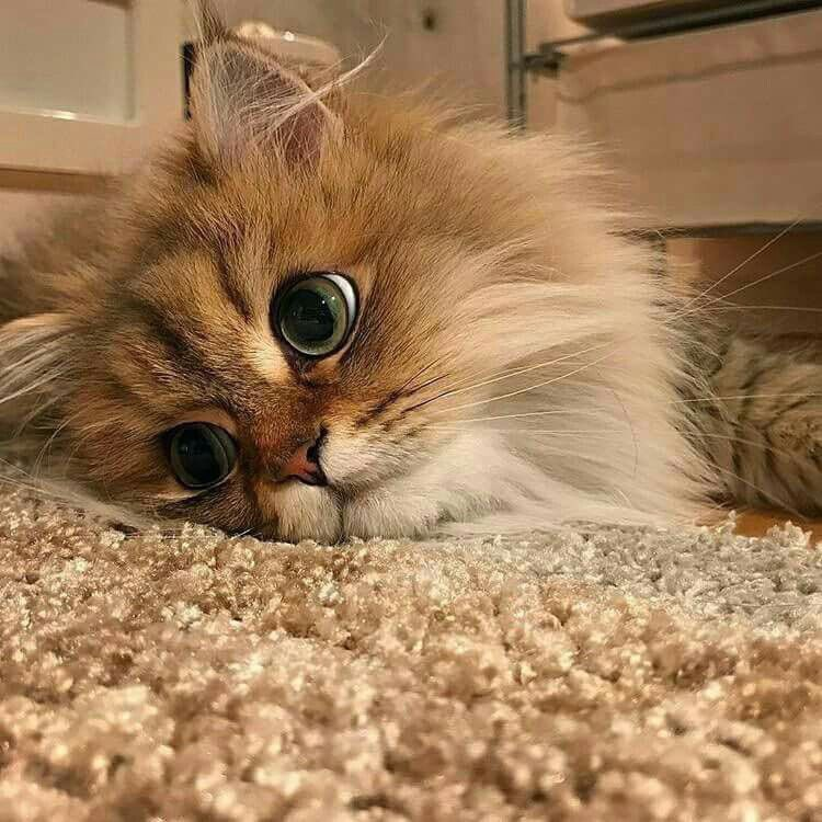 это скучаю котик картинки сейчас