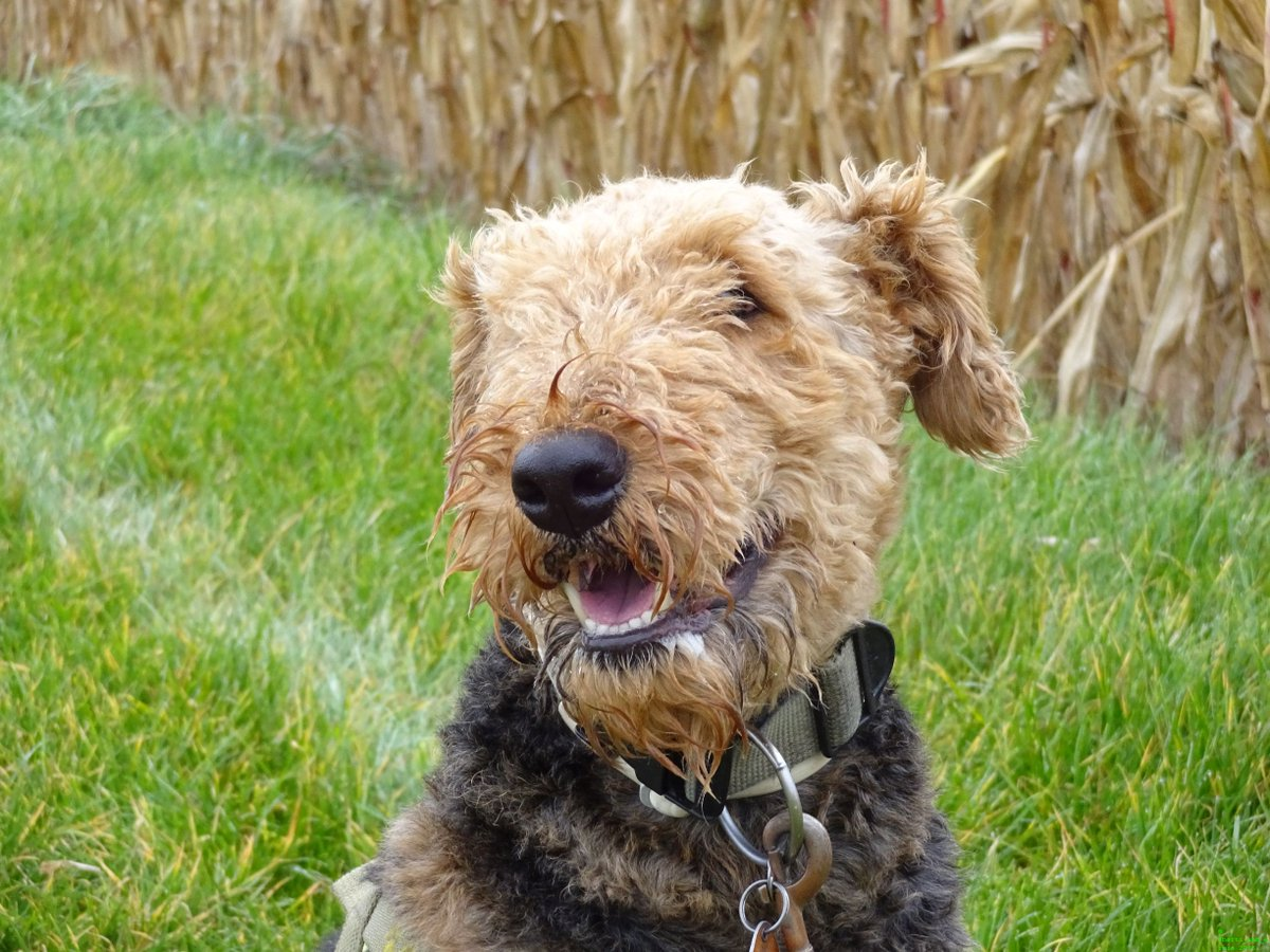 Every time he watches me like this, I feel like a #winner!  #dogsarejoy<br>http://pic.twitter.com/NjliPFaCid
