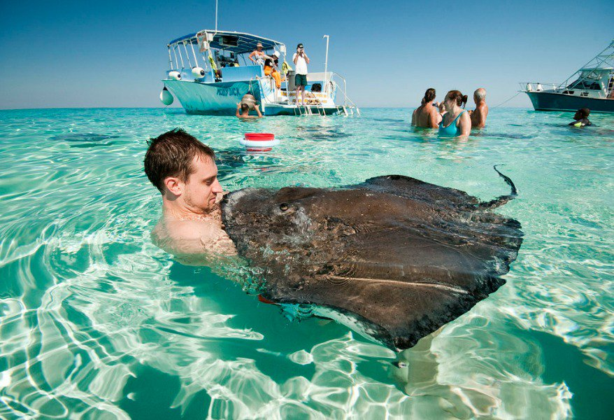 http:// bit.ly/1Y6hpVG  &nbsp;   Stingray city @TravelEditor #caymanislands #travel #tourism #vacation #traveling #travellers #Tours #holidays <br>http://pic.twitter.com/KCYRocet4U