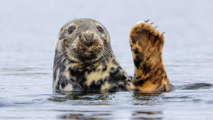 Seal killings by Scotland's #fishfarms rose by nearly 50% compared with the same period in 2016  https://www. thetimes.co.uk/article/fish-f arms-under-fire-for-seal-death-toll-ph5kqwdtq &nbsp; …  #Scotland #ecocide<br>http://pic.twitter.com/VtNCnw1AmB