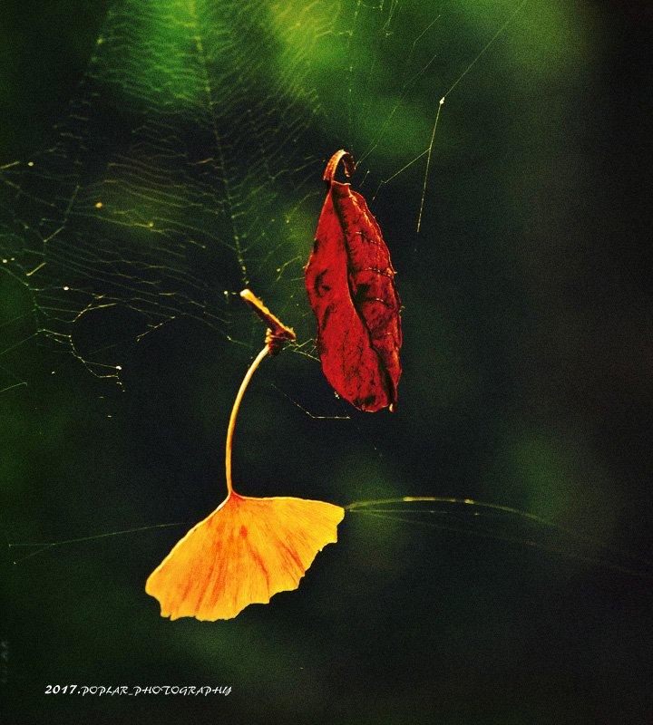 Japan&#39;s season changed into fall. . #autumn #beautiful #twitterJapan #fallen_leaves #wonderful #likes .<br>http://pic.twitter.com/mnTFmQnbYE