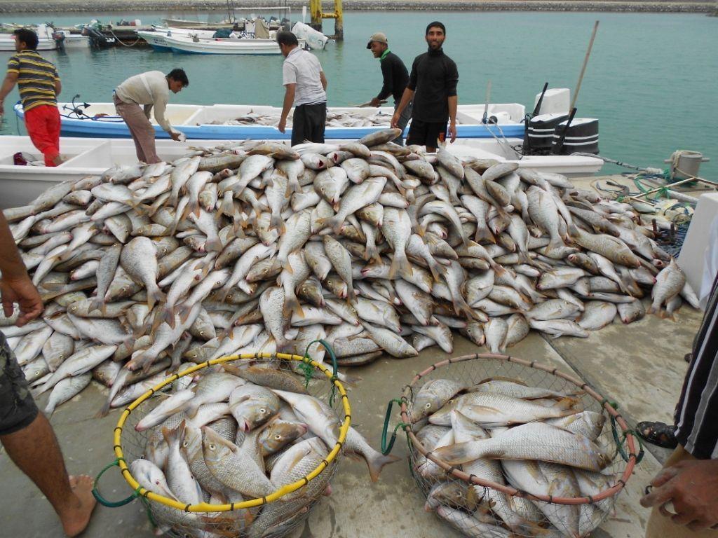 58.8 مليون ريال عماني إجمالي صادرات السل...