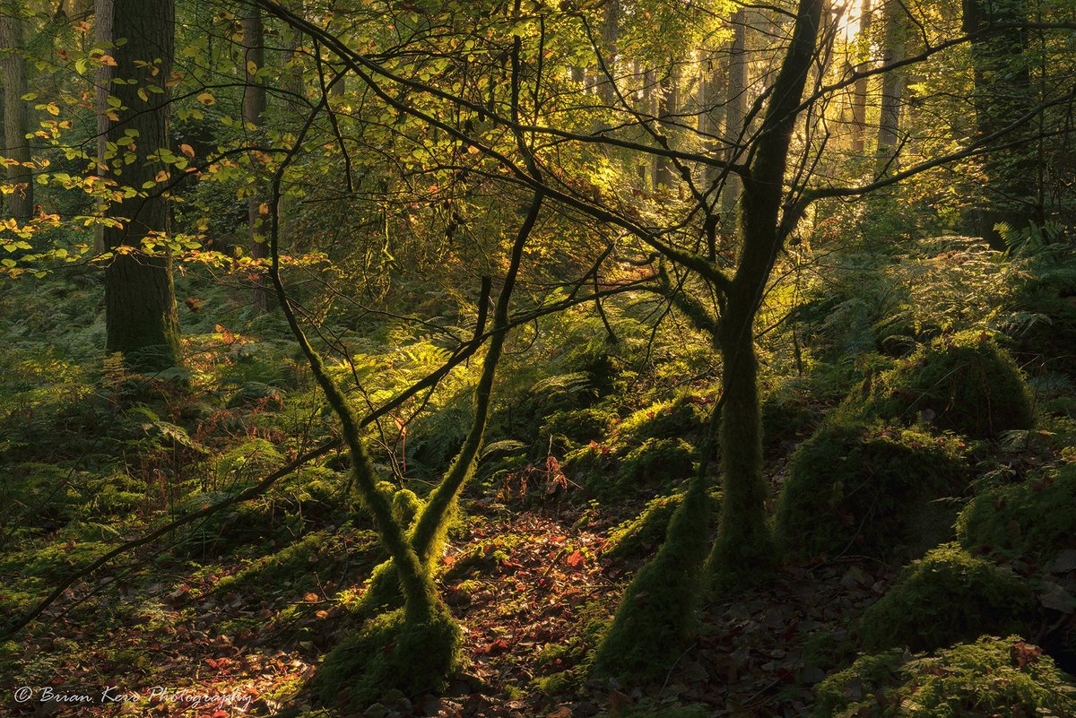 A few #woodland images from a wander in #newabbey last weekend #Sony #a7rii @FormattHitech @SonyUK @OPOTY @AP_Magazine @VisitScotland #dgwgo<br>http://pic.twitter.com/FbNlF5riII