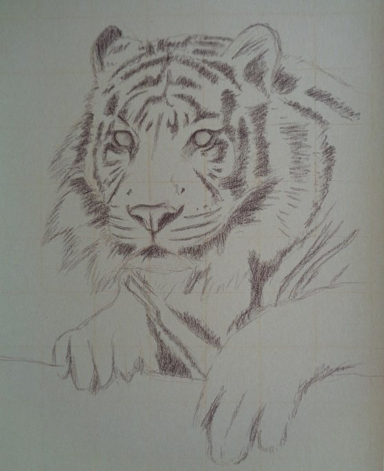 WIP. Just started a new pastel portrait of a tiger. Sketched in the outline. #WIP #tiger #wildlifeart #softpastels<br>http://pic.twitter.com/gGf1XEuv0b