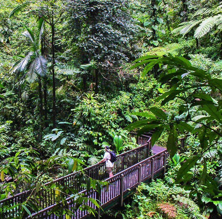 « And into the forest i go, To lose my mind and find my soul » said @floadventure . Visit our #UNESCO biosphere reserve @UNESCO #guadeloupe<br>http://pic.twitter.com/1mQF2cN5Tk