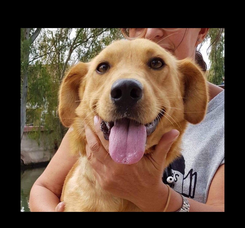 Found with big-infested-wound, Fotis is perfectly well &amp; full of life/love now! He needs a family to give love to in #UK #Germany #Holland <br>http://pic.twitter.com/kHvdJhgi7m