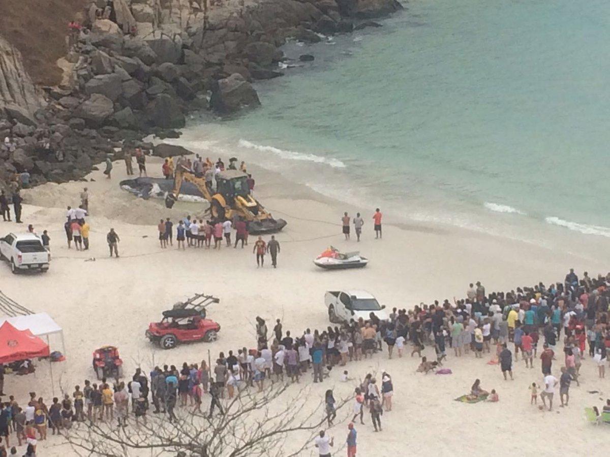 Baleia jubarte encalha em praia de Arraial do Cabo, na Região dos Lagos https://t.co/FWDRHSFjOb
