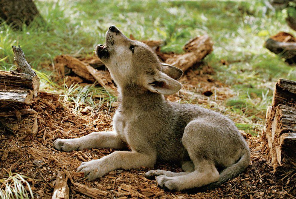 зайчонок и волчонок картинки создается