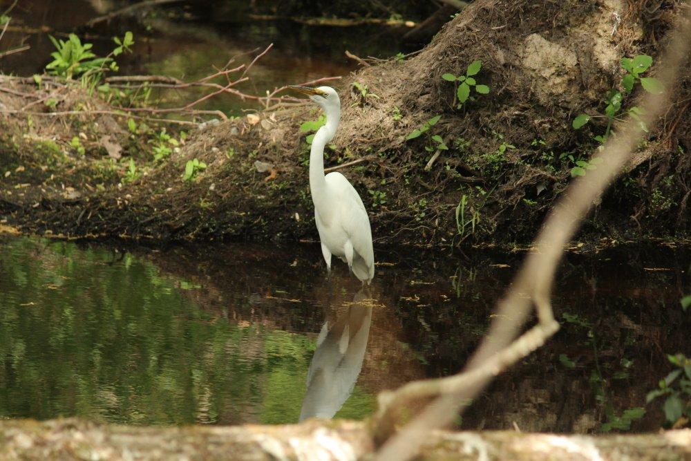 Did you know - Bombay Hook #WildRefuge i...
