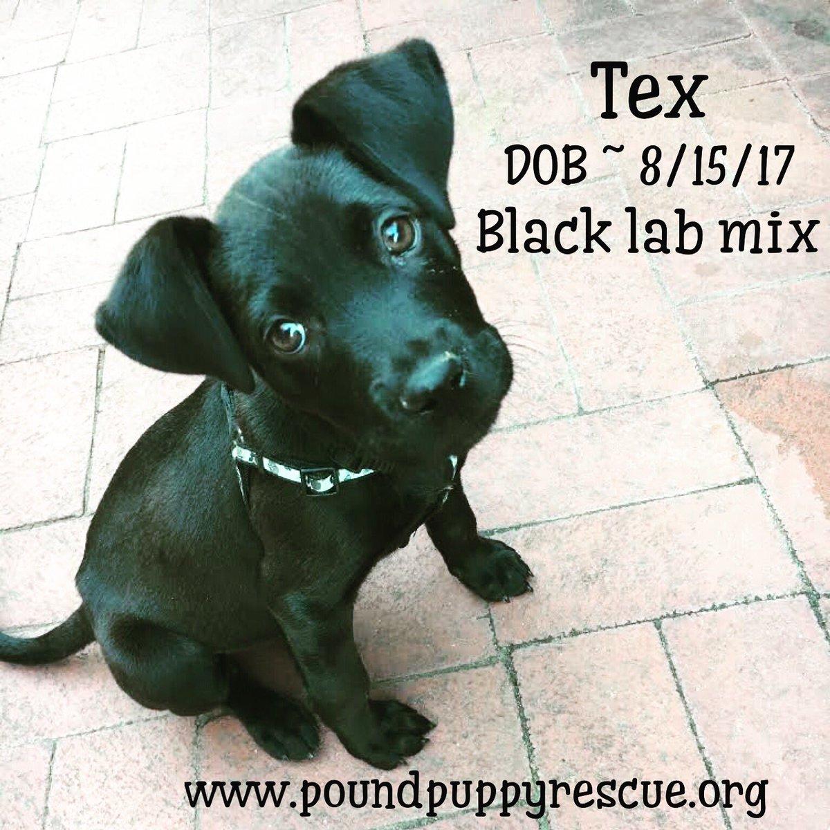 Pound Puppy Rescue PPRpoundpuppies