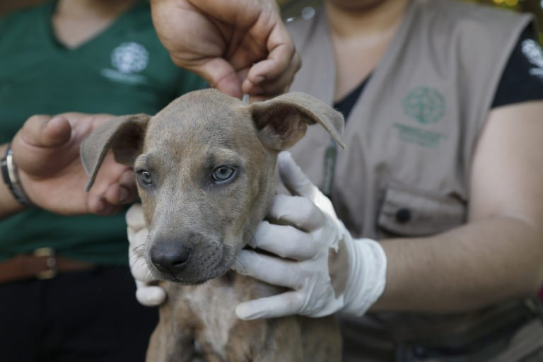 #OnTheBlog: @HSIGlobal is helping thousands of animals in Mexico &amp; Costa Rica. Details:  http:// bit.ly/2yFNBrU  &nbsp;  <br>http://pic.twitter.com/PTILPWso4e