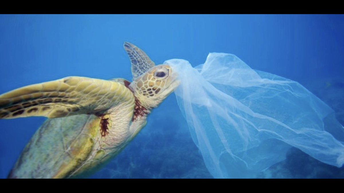 Green news!   #Chile to be the first country in the #Americas to ban plastic bags in coastal #cities      http://www. biobiochile.cl/noticias/inter nacional/america-latina/2017/09/21/chile-to-be-the-first-american-country-to-ban-plastic-bags-in-coastal-cities.shtml &nbsp; … <br>http://pic.twitter.com/2vLWinU2vV