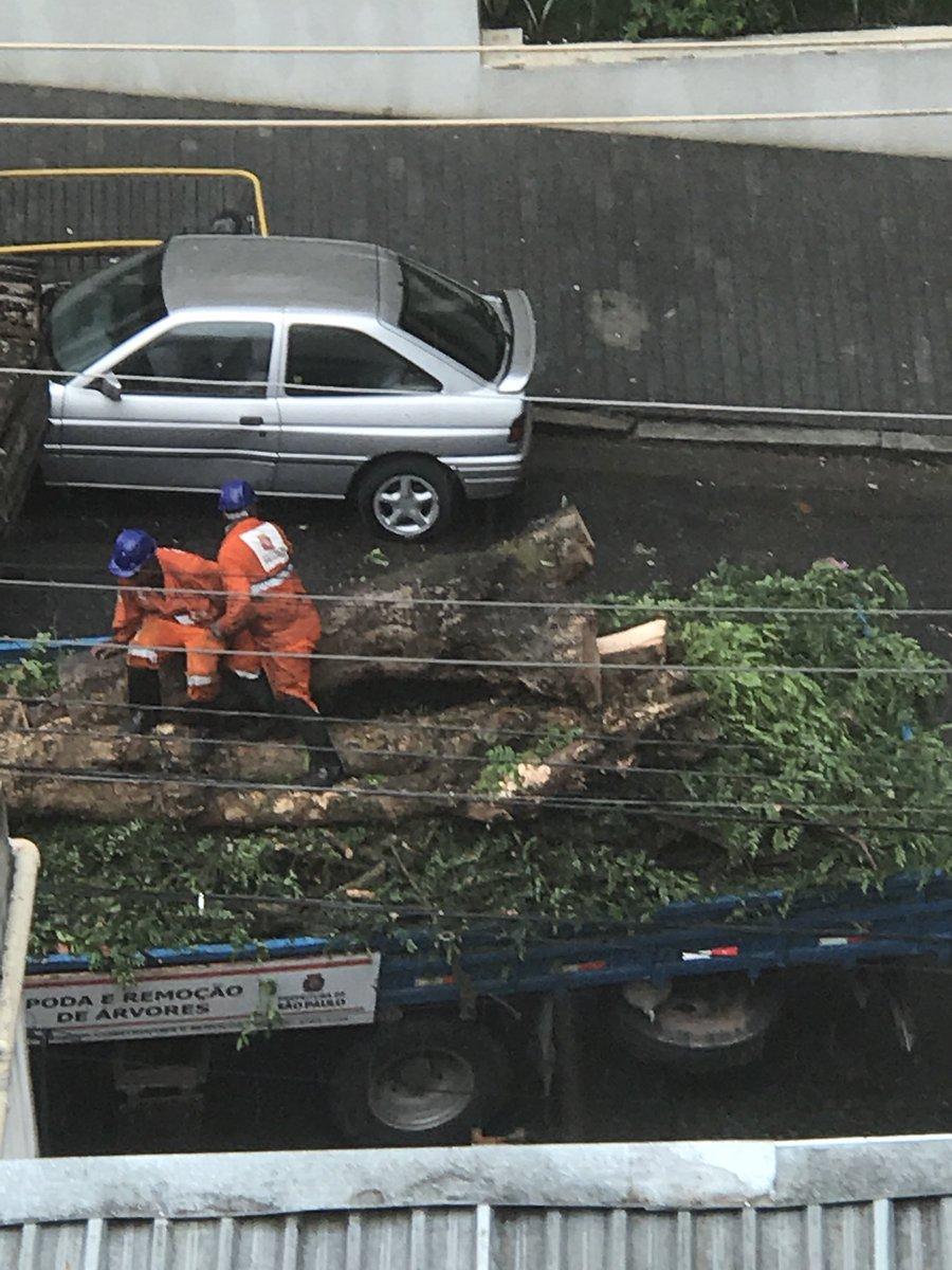 A cidade que enterra suas árvores para proteger seus fios