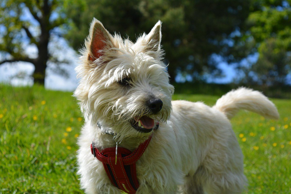 What a winning #smile! #dog #friends <br>http://pic.twitter.com/IdzufOyqLg