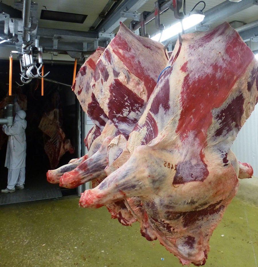 Modular Food  for Veal Slaughterhouse  174mzq
